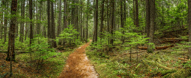 McDonald Falls Trail. Panoramic Composition Along McDonald Falls Trail, Glacier National Park, Montana Royalty Free Stock Image
