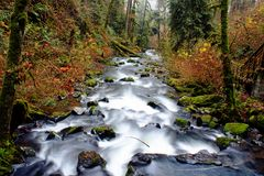 McDowell Creek in Oregon Royalty Free Stock Images