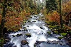 McDowellkreek in Oregon Royalty-vrije Stock Afbeeldingen