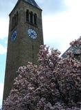 McGraw Zegarowy wierza magnoliowy drzewo w kwiacie w Ithaca zdjęcia royalty free