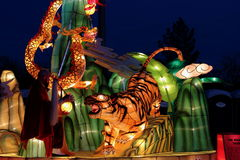 Mächtige Tigerseidenlaterne Stockbild