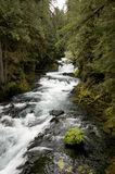 McKenzie River, Oregon Stock Image