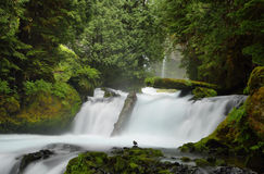 McKenzie River Oregon. Royalty Free Stock Photo