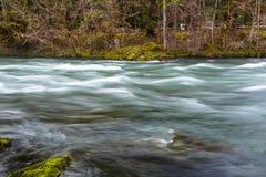 McKenzie River in Oregon Royalty Free Stock Photo