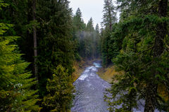 McKenzie River in Oregon Royalty Free Stock Images