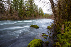 McKenzie River in Oregon Royalty Free Stock Image