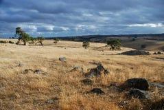 McLaren dallandskap Södra Australien australasian Arkivbild