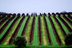 McLaren Vale roulant la vigne Photo stock