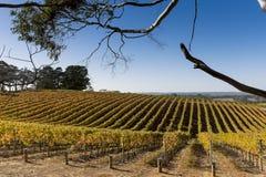McLaren Vale vineyard Stock Image