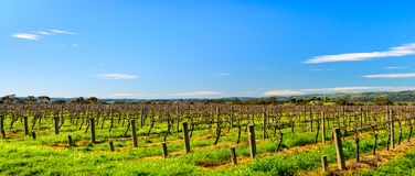 McLaren Vale wineries Royalty Free Stock Photo