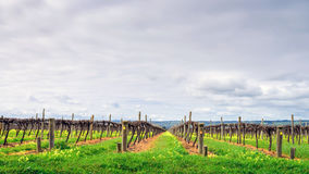McLaren Vale wineries Royalty Free Stock Photography