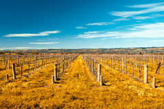 McLaren Vale wineries Royalty Free Stock Image