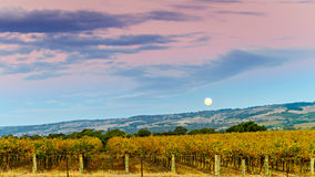 McLaren Vale winery moon rise. In autumn, South Australia Royalty Free Stock Photo