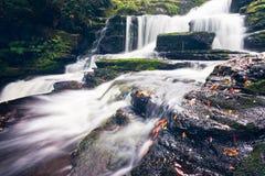 McLean cai na região de Catlins de Nova Zelândia imagem de stock royalty free