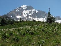 McNeil pekar, Mt.-huven Royaltyfria Bilder