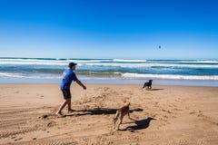 Mężczyzna psów kija Playtime plaża Zdjęcia Royalty Free