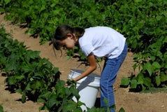 Mädchen auf dem Bauernhof Lizenzfreie Stockbilder