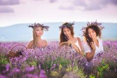 Mädchen auf dem Lavendelfeld Lizenzfreies Stockbild