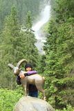 Mädchen, das eine Gämse vor Wasserfall umarmt Lizenzfreies Stockfoto
