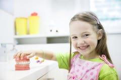 Mädchen, das Modell des menschlichen Kiefers mit zahnmedizinischen Klammern hält Stockbilder