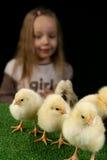 Mädchen und kleine Hühner 2 Stockbilder