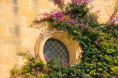 Picturesque facade with colorful purple bougainvillea flower inside the ancient fortified city of Mdina, Malta. Maltese architectu. Mdina, Malta Maltese old Royalty Free Stock Images
