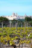 Mdina-Zitadelle und Weinberg, Malta Lizenzfreies Stockbild