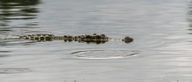 Me Bewust ben van krokodillen in Cat Tien Park stock afbeeldingen