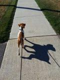 Me e la mia ombra Fotografie Stock Libere da Diritti