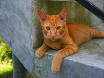 Me friend. My neighborhood cat in Thailand Stock Photography
