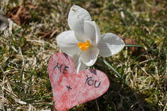 Me loves you. Love story next to white flower Stock Photo
