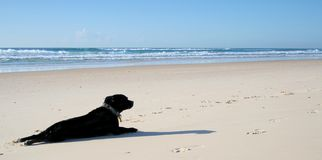 Me and My Shadow. Dog enjoying the sun on the beach Royalty Free Stock Images