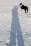 Me and My Shadow. Black and White dog on a snow and shadow of fotografer Stock Photo