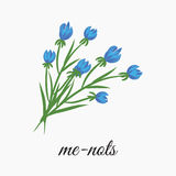 Me-nots Royalty Free Stock Image