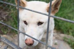 Âme sauvage dans la cage Photographie stock libre de droits