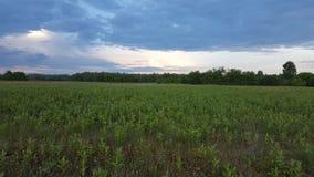 meadow fotografia royalty free