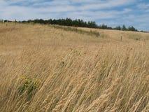 meadow żółty Obraz Royalty Free