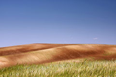 Meadow. Landscape of a meadow - wheat plantation Stock Photography