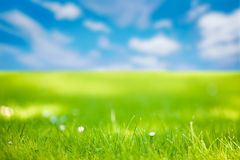 Meadow. Image of a summer meadow under a blue sky Stock Photos