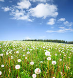 Meadow Royalty Free Stock Image