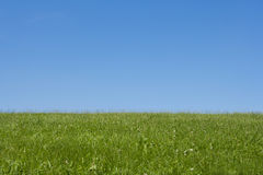 Meadow. Green meadow and sky in summer Royalty Free Stock Photography