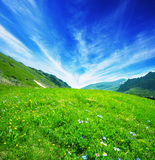 Meadow Royalty Free Stock Photography