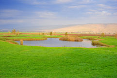 Meadow. A green Meadow with a small pond royalty free stock image