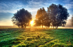 Meadow. At sunrise and mist Royalty Free Stock Images