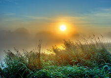 Meadow. A meadow misty morning at sunrise Royalty Free Stock Photo