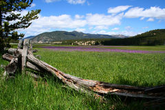 Meadow. High mountain meadow, near Stanley Idaho, spring Stock Photos