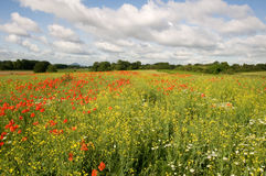 Meadow. Full of flowers during summer stock photos