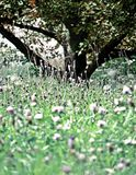 In the meadow. Shot of a meadow in summer royalty free stock photo