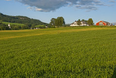 Meadow farm in Norway. Houses on meadow during norwaigian summer Royalty Free Stock Image