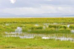 Meadow. Beautiful meadow with abundant water Stock Photos